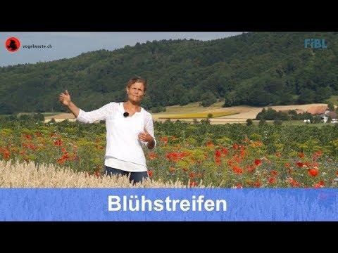 Blühstreifen für Bestäuber und andere Nützlinge (für funktionelle Biodiversität)