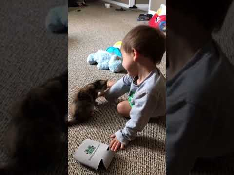 la-nuova-vita-della-gattina-con-il-fratellino-umano