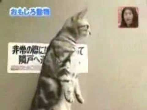 Japanese Standing Cats picture