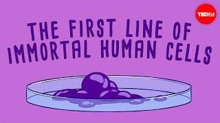 The immortal cells of Henrietta Lacks – Robin Bulleri