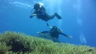 Poindimie New Caledonia  city pictures gallery : Diving New Caledonia, Tignes