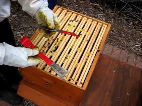 Backyard Beekeeping Part 22: Spring Management