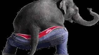 Elephant. Shaking His Booty