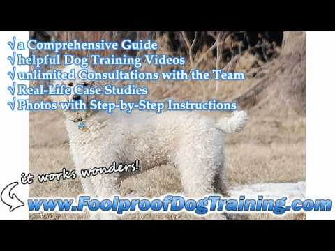Dog Training Schools In Ohio – Dog and Puppy Training