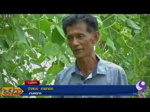 1 ไร่ คลายจน เกษตรตามรอยพ่อหลวง