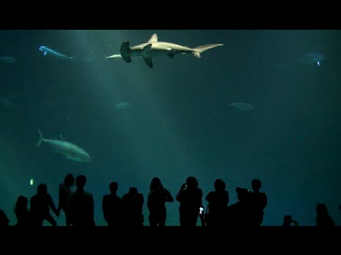 Monterey Bay (USA): Monterey Bay Aquarium (MBA) in Cali ...