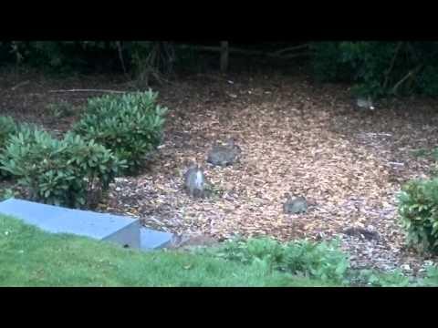 Konijnen achtertuin vakantie in familiehuis Nunspeet augustus 2013