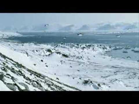 Quién dijo que los pingüinos no vuelan