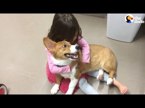 Aawww, koira lohduttaa itkevää tyttöä