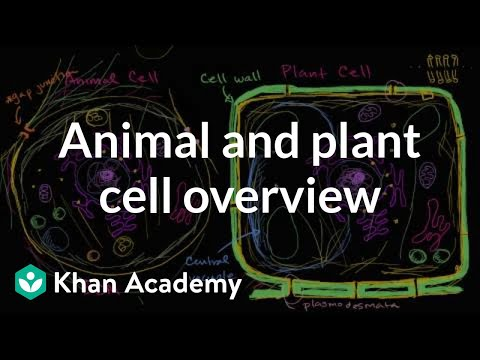 Overview Of Animal And Plant Cells Video Khan Academy