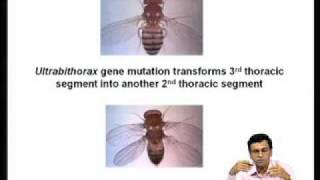 Mod-07 Lec-26 Homeotic Genes