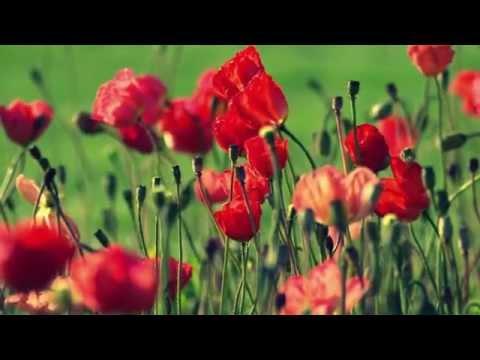 مناظر طبيعية وشلالات وزهور رائعة