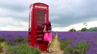 mayfield lavender 2016