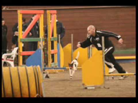agility jack!
