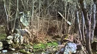 "Video La Maldición de La Bestia 1975 (Pelicula COMPLETA)   ""B"" MP3, 3GP, MP4, WEBM, AVI, FLV Agustus 2018"