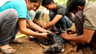 """Giải cứu chú chó bị hóa """"đá"""" :)"""
