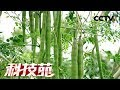 Download Video 【Agricultural Technology】20171225 | CCTV Agriculture