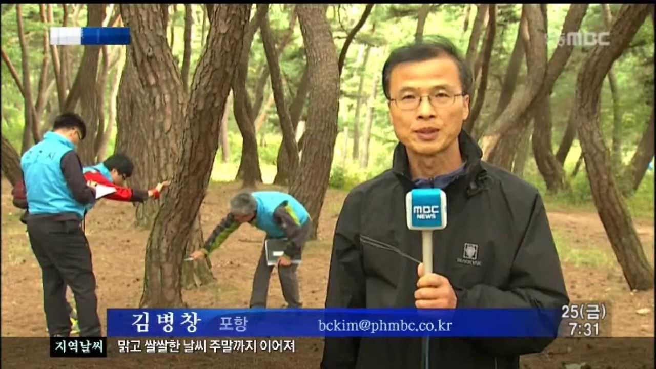 R포항삼원)남산 재선충 예방 비상