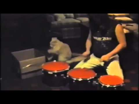 0 Cat Drums Along With Pal