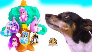 Video Dog Plays with Fur Babies Dolls - Cookie Swirl C Toy Video MP3, 3GP, MP4, WEBM, AVI, FLV Januari 2019