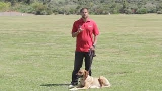 How to Stop a Male Dog From Marking at a Female Dog's House : Dog Behavior&Training