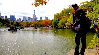 Video GOING IKE!!! Bank Fishing in Central Park (Ep. #7) MP3, 3GP, MP4, WEBM, AVI, FLV Mei 2019