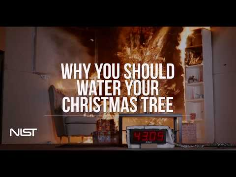 I work in a fire lab, we burned some trees. If you have a Christmas Tree, please water it every day (Well-watered vs. Dry Christmas tree fire)