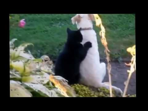 best fail compilation del mondo animale!