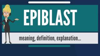 What is EPIBLAST? What does EPIBLAST mean? EPIBLAST meaning, definition & explanation