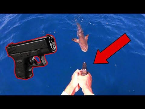 Good thing we had a gun! - Dinner Fishing