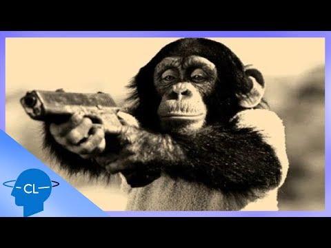 Ce s-ar întâmpla dacă ANIMALELE s-ar lupta cu OAMENII?