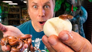 I JUST HATCHED SOME REALLY RARE PYTHONS!! SUPER INSANE!! | BRIAN BARCZYK by Brian Barczyk