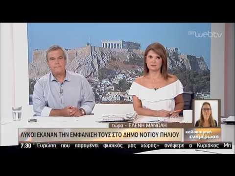 Κοπάδι λύκων κατέβηκε στο Πήλιο   23/08/2019   ΕΡΤ