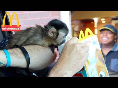 Baby Monkey Visits Mcdonalds Drive Thru! (MONKEYHAPPY MEAL)
