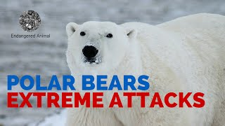Video Extreme Polar Bears Attack: Fatal Polar Bears Attack MP3, 3GP, MP4, WEBM, AVI, FLV Mei 2017