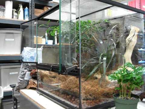 Building a Crested Gecko Vivarium