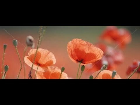 To Any Dead Officer By Siegfried Sassoon