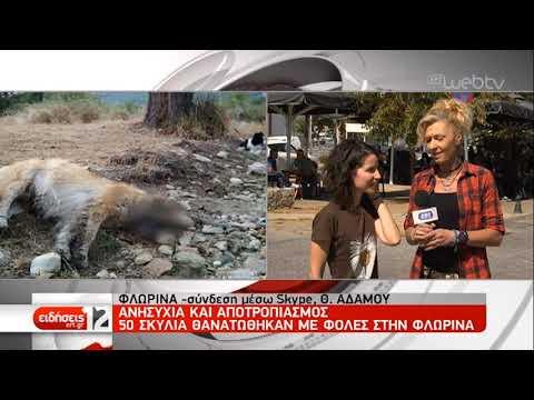 Ανησυχία και αποτρόπαιο θέαμα: 50 σκυλιά θανατώθηκαν από φόλες | 19/09/2019 | ΕΡΤ