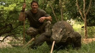 Video Largest Lizard on Earth | The Komodo Dragon | Deadly 60 | Indonesia | Series 3 | BBC MP3, 3GP, MP4, WEBM, AVI, FLV Maret 2019