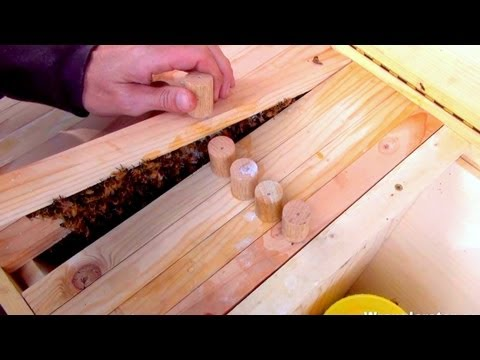 Beekeeping For Beginners Introducing Queen