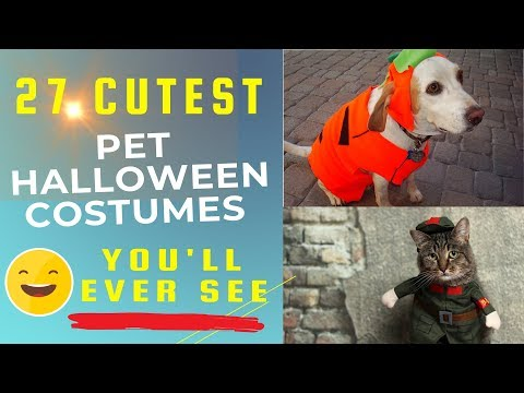 27 Pets in Cute Halloween Costumes