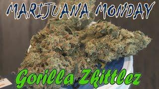 Gorilla Zkittlez Marijuana Monday by Urban Grower