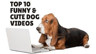 Dogs free YouTube video