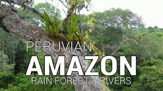 Video Amazon rainforest, Amazon river, and Napo river via Iquitos, Peru. MP3, 3GP, MP4, WEBM, AVI, FLV Juli 2018