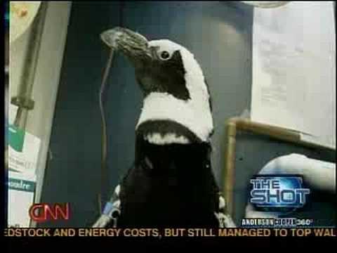 Video of Pocket Penguins