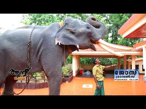 Video Mullath Kailas  ( aana peruma episode -20 ) download in MP3, 3GP, MP4, WEBM, AVI, FLV January 2017