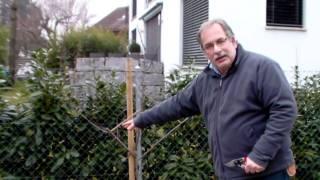 #324 Schneiden im Garten 2011 Inderkum 4v10 - Schnitt eines Zwetschgenbaums
