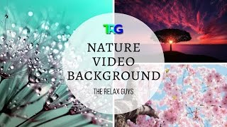 """Nature Video Background HD with 3 Gymnopédies and William Tell Overture  Nature HD Videos 1080p ♮63 ● Leave a LIKE, Comment & Subscribe!  ● Join us on Youtube for weekly update: https://goo.gl/Hry5Ut● Richard Wagner - Ride of the Walkyries - Classical Music with Audio Spectrum Background ♫ 62: https://goo.gl/sJn5KCThe Relax Guys on Social Media:● Facebook: https://www.facebook.com/therelaxguys/● Twitter: https://twitter.com/TheRelaxGuys● Instagram: https://www.instagram.com/therelaxguys/● VK: https://vk.com/therelaxguys● Youtube: https://www.youtube.com/therelaxguyzThanks to...Audio; Erik Satie Éric Alfred Leslie Satie (French: [eʁik sati]; 17 May 1866 – 1 July 1925), who signed his name Erik Satie after 1884, was a French composer and pianist. Satie was a colourful figure in the early 20th century Parisian avant-garde. His work was a precursor to later artistic movements such as minimalism, Surrealism, repetitive music, and the Theatre of the Absurd.https://en.wikipedia.org/wiki/Erik_Satie00:00 Gymnopedie No 1 by Erik Satie03:12 - Gymnopedie No 2, 05:51 Gymnopedie No 3 by Kevin MacleodSource: http://incompetech.com/music/royalty-...Gioachino Antonio Rossini; 29 February 1792 – 13 November 1868) was an Italian composer who wrote 39 operas as well as sacred music, chamber music, songs, and some instrumental and piano pieces.His best-known operas include the Italian comedies Il barbiere di Siviglia (The Barber of Seville) and La Cenerentola (Cinderella), and the French-language epics Moïse et Pharaon and Guillaume Tell (William Tell). A tendency for inspired, song-like melodies is evident throughout his scores, which led to the nickname """"The Italian Mozart"""".Until his retirement in 1829, Rossini had been the most popular opera composer in history. He is quoted as joking, """"Give me the laundress' bill and I will even set that to music.""""00:00 - 11:45 William Tel Overture Video:Beachfront B-Roll Videos;Daffodil, Dewdrop Rodeo, Birds and Feeder, Birds on Wood, Beach and She"""