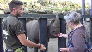 Feeding Thabo the black rhinoceros - once in a lifetime experience