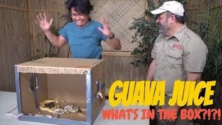 What's In the Box Challenge Prehistoric Edition by Prehistoric Pets TV